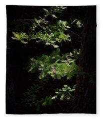 4551- Cypress Tree Detail Fleece Blanket