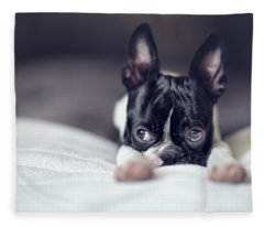 Boston Terrier Puppy Fleece Blanket