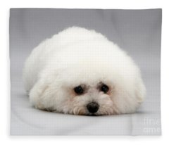 Bichon Frise Fleece Blanket