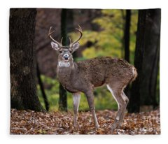 8 Point Buck Fleece Blanket