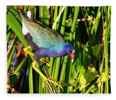 Purple Gallinule Fleece Blanket