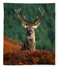 Red Deer Stag Fleece Blanket