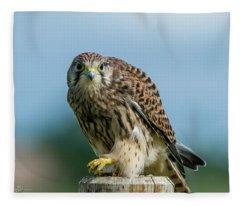 A Beautiful Young Kestrel Looking Behind You Fleece Blanket
