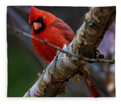 A Cardinal In Spring   Fleece Blanket
