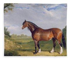 A Clydesdale Stallion Fleece Blanket