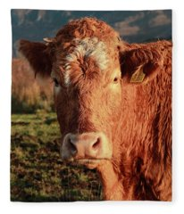 A Curious Red Cow Fleece Blanket
