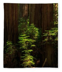 A Deer In The Redwoods Fleece Blanket
