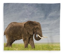 A Gentle Giant Fleece Blanket