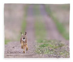 A Hare's Tail Fleece Blanket