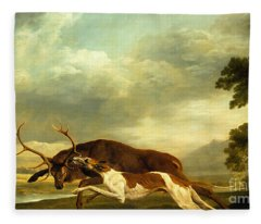 A Hound Attacking A Stag Fleece Blanket