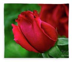 A Red, Red Rose Fleece Blanket