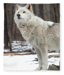 A Wolfs Modeling Pose Fleece Blanket