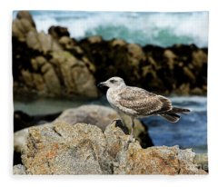 A Young Western Gull At Pacific Grove Fleece Blanket