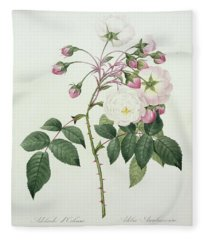 Adelia Aurelianensis Fleece Blanket