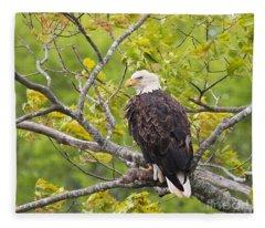 Adult Bald Eagle Fleece Blanket
