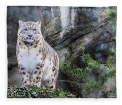 Adult Snow Leopard Standing On Rocky Ledge Fleece Blanket