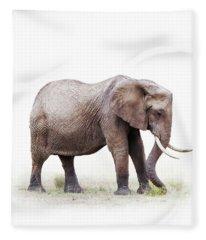 African Elephant Grazing - Isolated On White Fleece Blanket