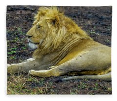 African Lion Resting Fleece Blanket