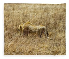 African Lion Stalking Fleece Blanket