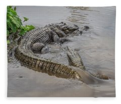Alligators Courting Fleece Blanket
