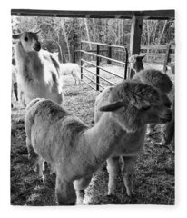 Alpaca Meeting  Fleece Blanket