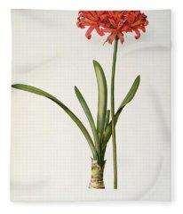 Amaryllis Curvifolia Fleece Blanket