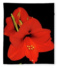 Amaryllis Display Fleece Blanket