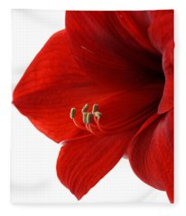 Amaryllis On White 3 Fleece Blanket