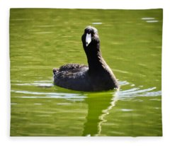 American Coot Portrait Fleece Blanket