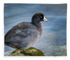 American Coot Fleece Blanket