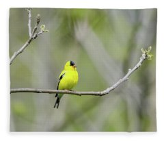 Fleece Blanket featuring the photograph American Goldfinch by Steven Santamour