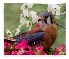 American Kestrel In The Springtime Fleece Blanket
