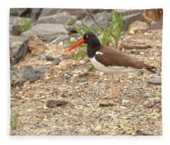 American Oystercatcher Fleece Blanket