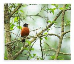 American Robin On Tree Branch Fleece Blanket