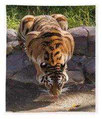 Amur Tiger Drinking Fleece Blanket