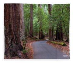 Ancient Redwoods Fleece Blanket