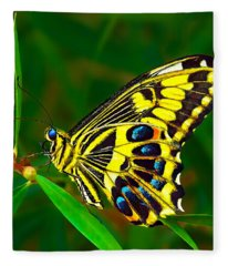 Anise Swallowtail Butterfly Fleece Blanket