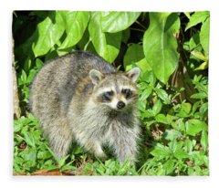 Another Surprised Raccoon Fleece Blanket