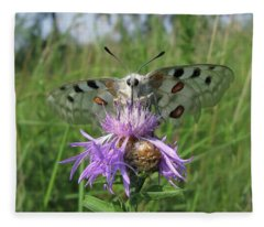 Apollo Butterfly - Parnassius Apollo 1 Fleece Blanket