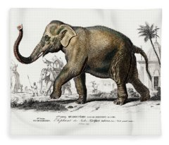 Asiatic Elephant - Elephas Maximus Indicus Fleece Blanket