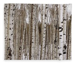 Aspens In Winter Panorama - Colorado Fleece Blanket