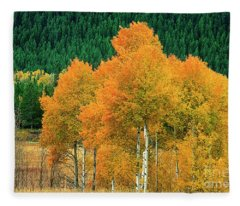 Aspens Populus Tremuloides Fall Color Grand Tetons National Park Wyoming Fleece Blanket