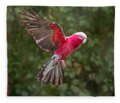 Australian Galah Parrot In Flight Fleece Blanket