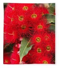 Australian Red Eucalyptus Flowers Fleece Blanket