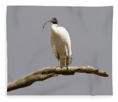 Australian White Ibis Perched Fleece Blanket