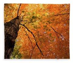 Autumn Canopy In Maine Fleece Blanket