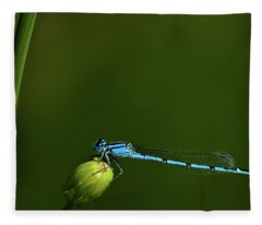 Azure Damselfly-coenagrion Puella Fleece Blanket
