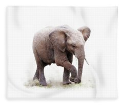 Baby African Elephant Isolated On White Fleece Blanket