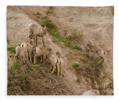 Baby Bighorns Fleece Blanket