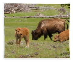 Baby Bison Fleece Blanket